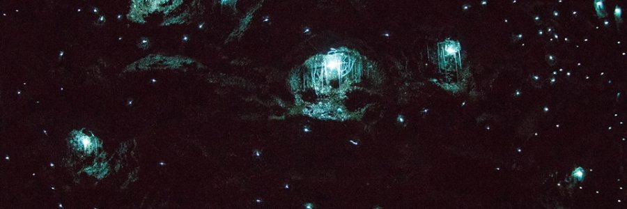 Photo From Tamborine Mountain Glow Worm Caves